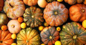 Decatur Magazine - Get Your Gourd On